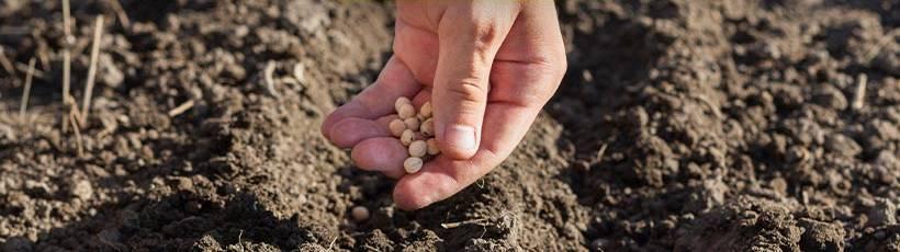 Evite desperdícios de sementes com as novas embreagens elétricas Trimble