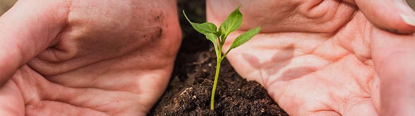 Pesquisa visa melhorias no manejo do solo e produtividade da cultura