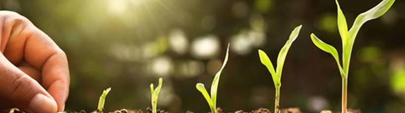 Preparando o solo para aumentar a produtividade para cultura de grãos