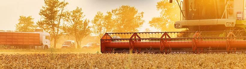 Safra de grãos deve alcançar 300 milhões de toneladas em dez anos